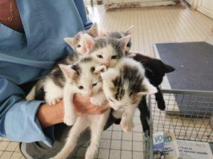chatons-veterinaire