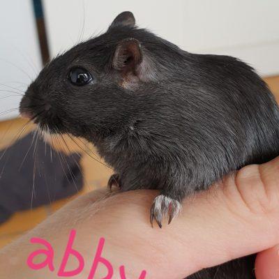 Abby ( FA Aurélie)