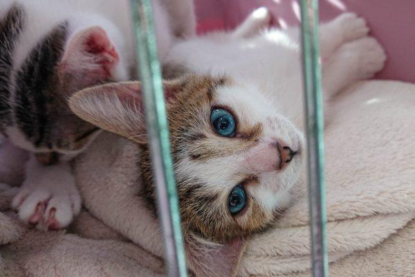 chaton-barreau