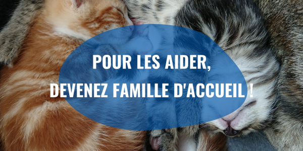 chatons-famille-accueil